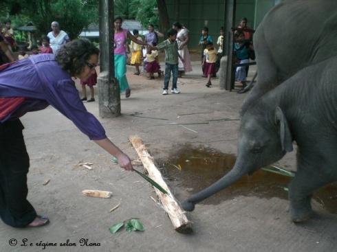 Pinawella Orphanage, Sri Lanka